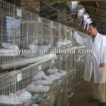 cheap rabbit cages made in china