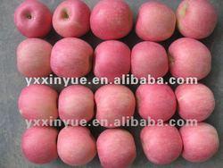 2014 Fresh Apple of Fruit
