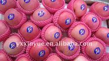 Best Price Fuji Apple of Yantai