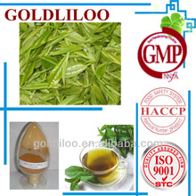 GMP & HACCP Organic Natural Green Tea Extract