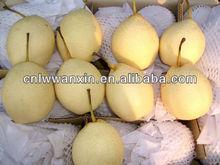 China fresh fruits Ya Pear
