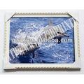 Pet 2013 matérielle 3d dauphin. 3d photos de peinture décoration murale(1009)