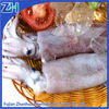 Frozen whole squid for tuna bait