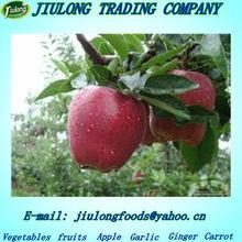 wholesale prices huaniu apple fruit