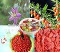 Cinese bacca di goji frutta, bacca di goji fresco