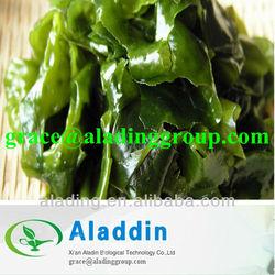 Natural Extracts Manufacturers kelp extract fucoidan/wakame kelp extract