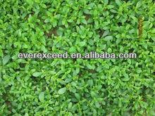 high quality stevia sugar price