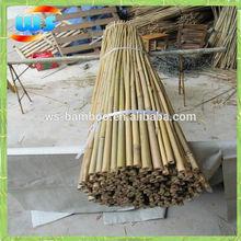 Green garden bamboo canes 180 12/14