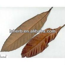 100% Natural Ursolic acid 25% Loquat Leaf Extract