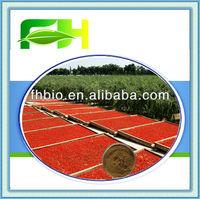 100% Natural Lycium Barbarum Extract/Goji Berry P.E.