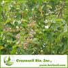 2013 100% Organic Vitex Extract Powder