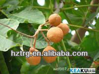 reliable quality horse chestnut plant extract