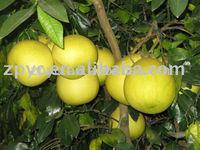 Pinghe Fresh Honey Pomelo For Sale