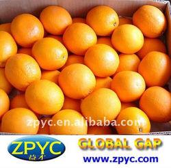 Chinese Fresh Navel Orange