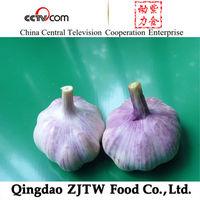Chinese Fresh Red Garlic/Purple Garlic (2014 Low Price)