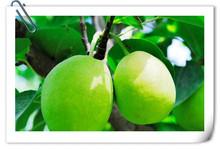 Fresh Fragrant Pears