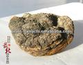 100% naturale e migliore qualità chaga(Inonotus obliquo), estratto