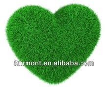 Turkey Artificial Grass LK--001
