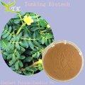 Iso certificado-( saponinas esteroidais) de protodioscina extrato de tribulus terrestris