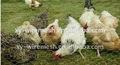 vente en gros cages à oiseaux en treillis soudé galvanisé gabion treillis métallique
