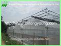 multi span estufa agrícola do projeto