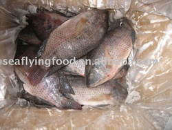 Frozen whole round tilapia