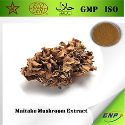 Kosher&GMP BNP Grifola Frondosa Extract Maitake Mushroom Extract