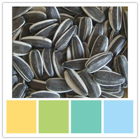 buy chinese health edible salted sunflower seeds