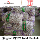 2014 China fresh garlic(10kgs mesh bag)