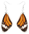Unique beautiful REAL butterfly wing earring