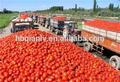 2014 vendita calda concentrato di pomodoro