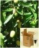Neem Extract - Azadirachtin Extraction
