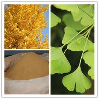 100% natural pharmaceutical grade 24% flavonoids ginkgo biloba leaf extract