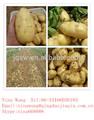 de exportación de china dulce de semilla de papa fresca