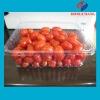 PET clear plastic frozen food tray