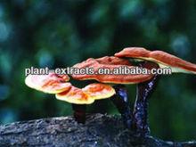 Ganoderma lucidum /ling zhi /reishi extract powder