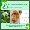 Angelica extract powder 1%ligusiilide