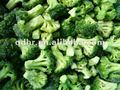 المحاصيل الطازجة جديدة 2014 البروكلي المجمدة