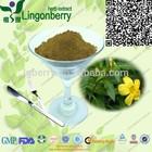 Daniana leaf Extract powder/Natural Damiana