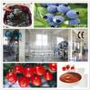 tomato/buleberry paste processing production line
