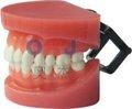 Dental dentes padrão modelos