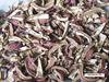 REJL Dried Ganoderma Mushroom