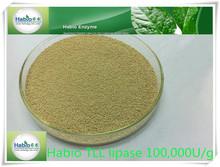 2013 best enzyme Lipase powder/granule(food grade enzyme)