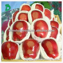 new season 2013 fresh red delicous sweet crispy minerals Tianshui huaniu apple