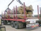 FSC Pure Eucalyptus globulus in green round debarked saw logs