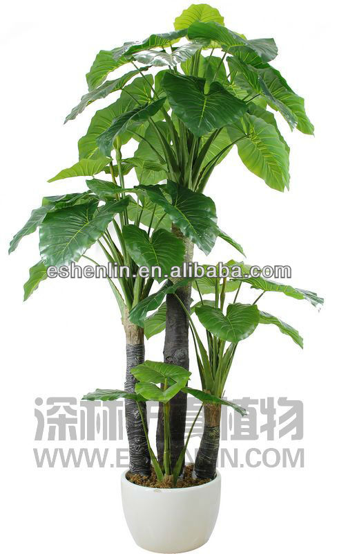 Large Leaf House Plants Create An Indoor Jungle With These Large