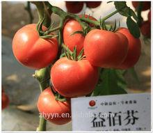 yibaifen vegetable seeds