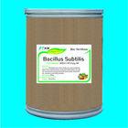 aquaculture bacillus subtilis fermentation 20 billion cfu/g DP