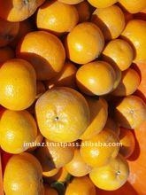 2015 Special Offer - Mandarin Orange, Citrus Fruit from Pakistan