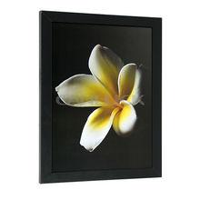 Art Framed Prints/ Beautiful Picture Framed Prints/ Flower Framed Prints
